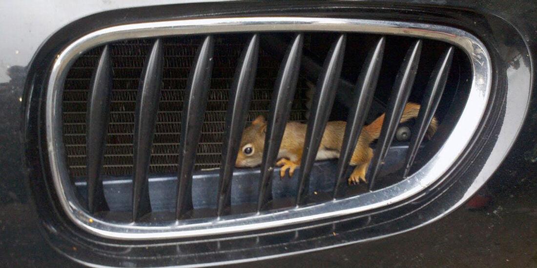 BMW Eichhörnchen