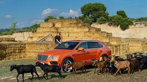 Bentley Bentayga gegen Ziege