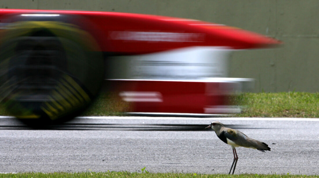 Ferrari - GP Brasilien - 26. November 2011