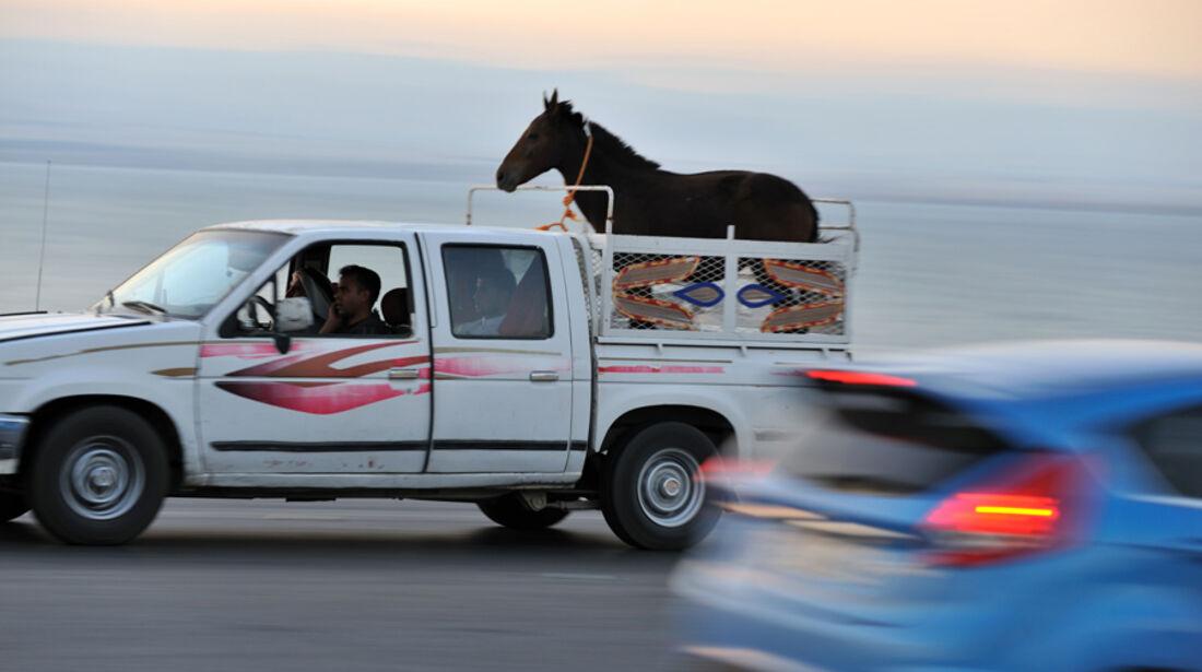 Pferd auf Pickup