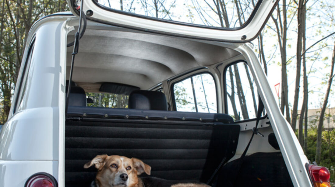 Renault 4, Kofferraum, Hund, Heckklappe offen