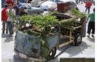 VW T1 Bus Ratte