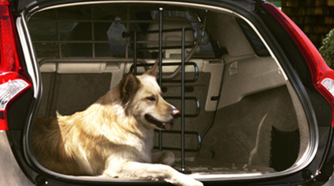 Volvo V60, Kofferraum, Hund
